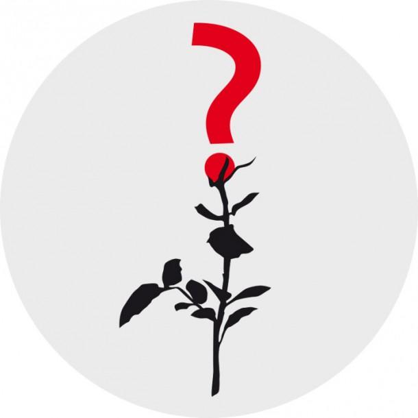 Rose Frage